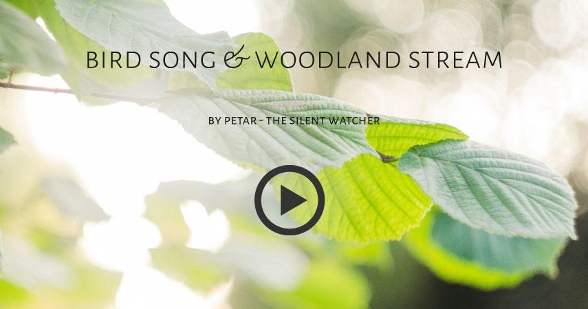 Birdsong & woodland stream