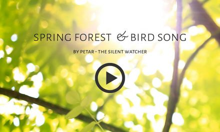 Spring forest & bird song