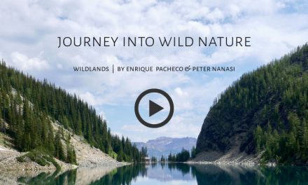 Journey into Wild Nature