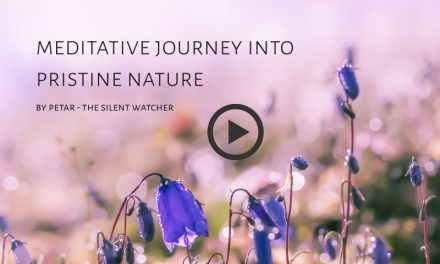 Meditative Journey into Pristine Nature