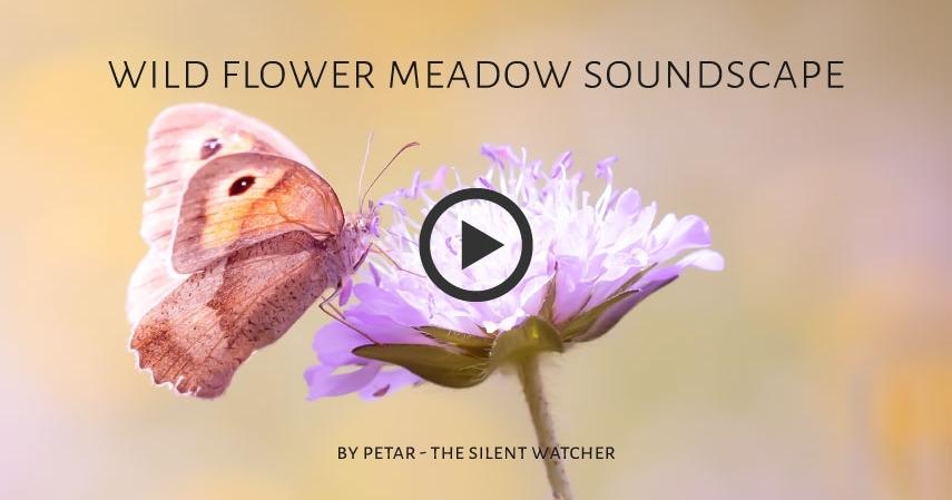 Wildflower Meadow Soundscape